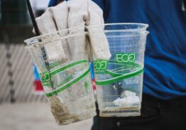 Discovering the Truth Behind Bioplastics